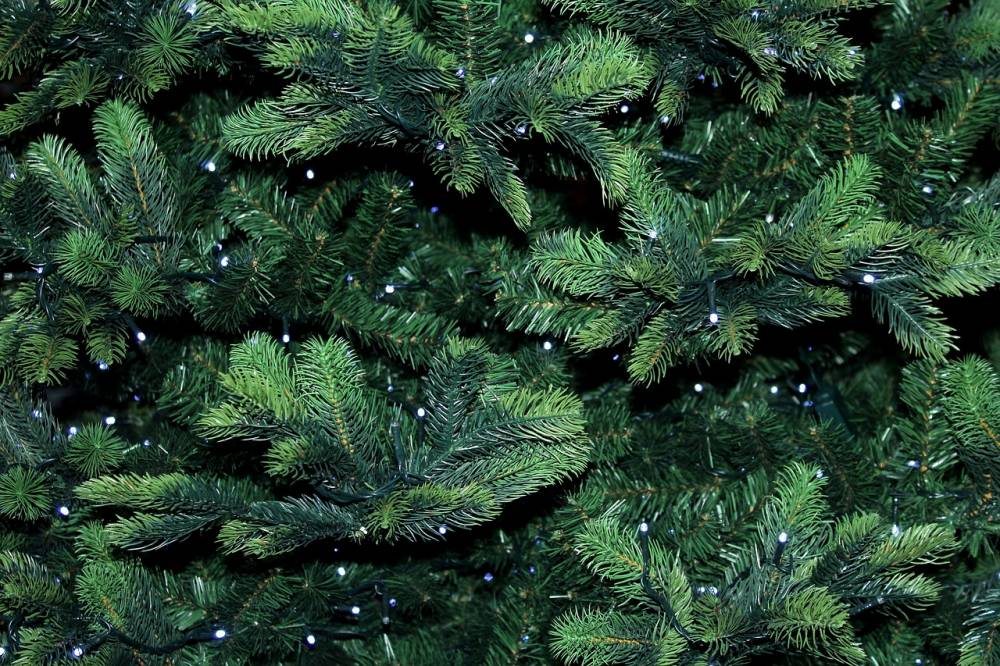 Christmas Tree Disposal.Don T Trash It Recycle It Holiday Tree Recycling Made