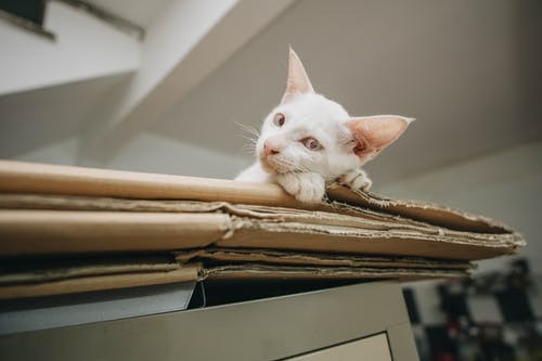 cardboard-box-cat-2