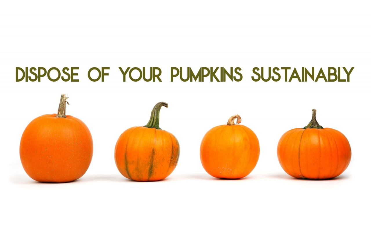 Dispose of your Pumpkins Sustainably