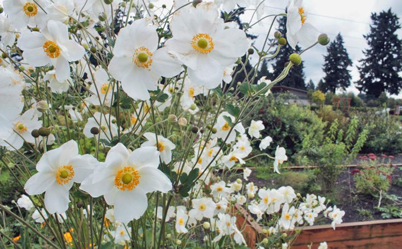 growing the northeast garden regional ornamental gardening regional ornamental gardening series