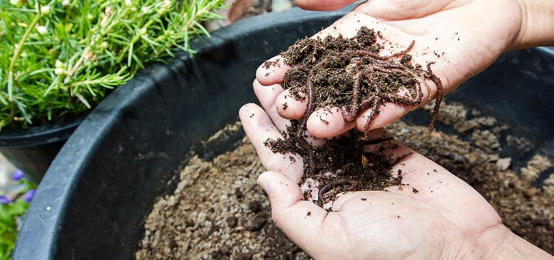 nbb healthy soil article