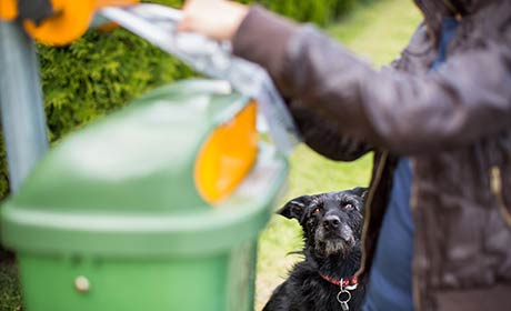 Pet waste Q&A